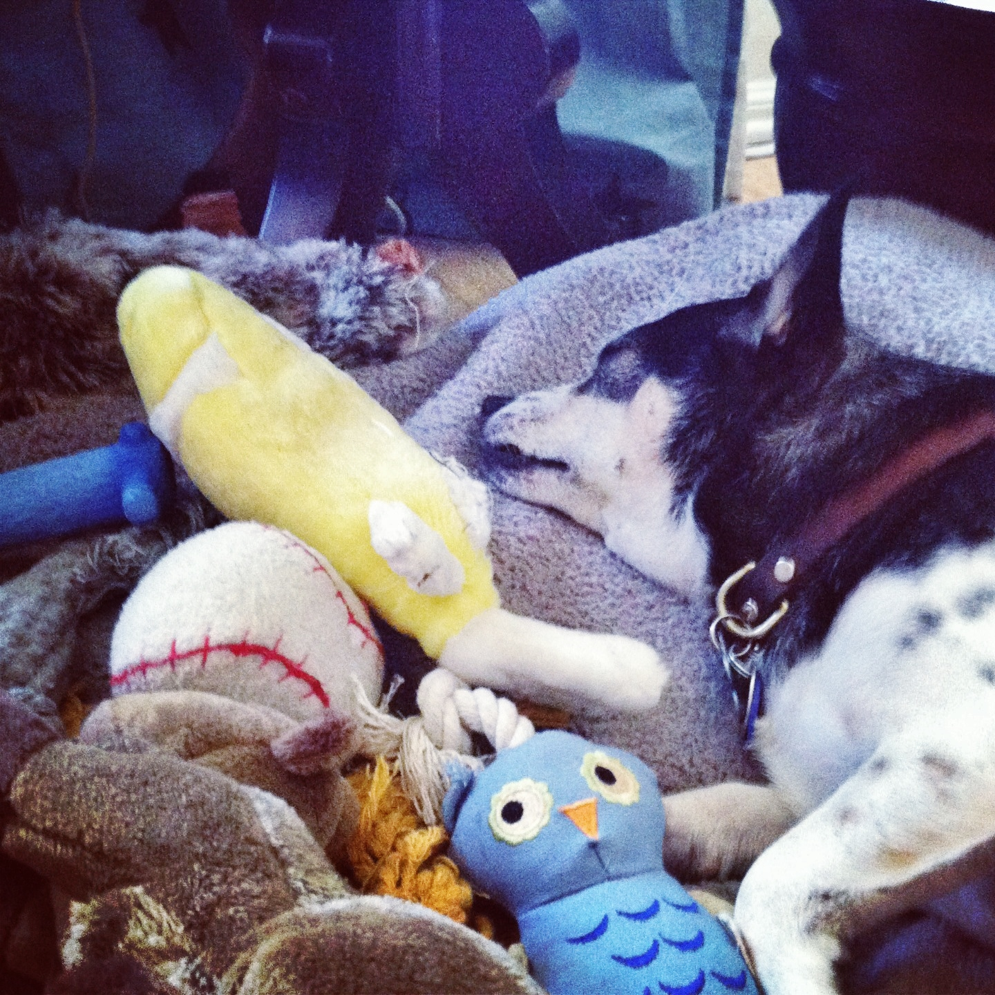 Toby, the toy hoarder.