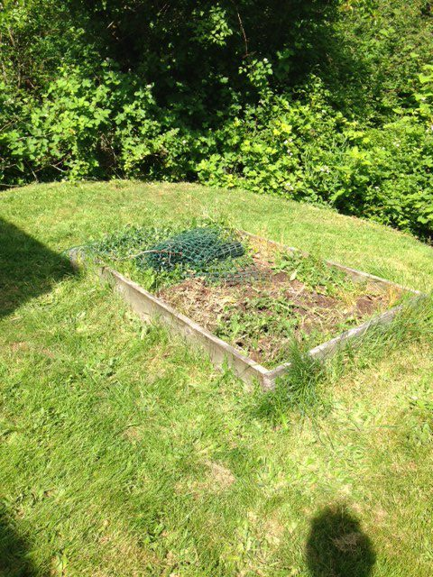 [Image description: an overgrown raised bed with trash and weeds.]